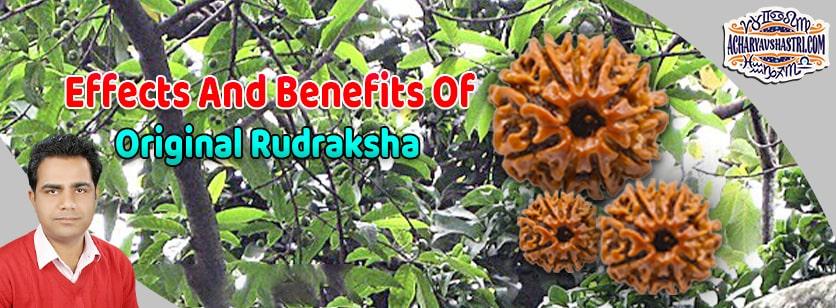 1 to 21 Mukhi Rudraksha Beads Benefits - Types of Rudraksha with Benefits and how to wearing Rudrakshas By Acharya V Shastri.