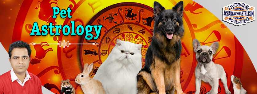 What Everyone Is Saying about Pet Astrology Zodiac and smoking Nowadays