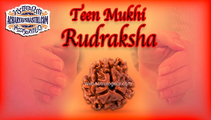 Strengths, Benefits and Importance of Teen Mukhi Rudraksha (3 - Three Face Rudraksha) By Acharya V Shastri