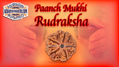 Strengths, Benefits and Importance of 5 Mukhi Rudraksha (5 -Five Face Rudraksha) By Acharya V Shastri.