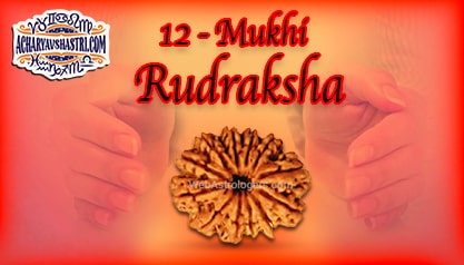 Strengths, Benefits and Importance of 12 Mukhi Rudraksha (Barah Face Rudraksha) By Acharya V Shastri.