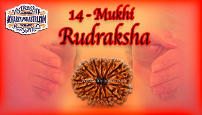 Strengths, Benefits and Importance of 14 Mukhi Rudraksha (Fourteen Face Rudraksha) By Acharya V Shastri.
