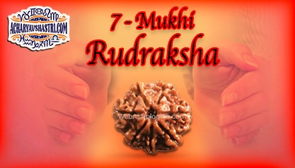 Strengths, Benefits and Importance of 7 Mukhi Rudraksha (7- Seven Face Rudraksha) By Acharya V Shastri
