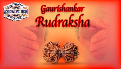 Strengths, Benefits and Importance of Gauri Shankar Rudraksha - गौरी शंकर रूद्राक्ष By Acharya V Shastri.